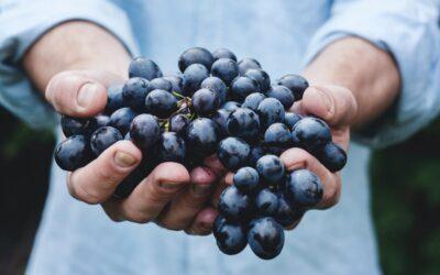 Még több szőlőt, főleg kéket