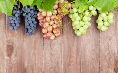 A szőlő 2.